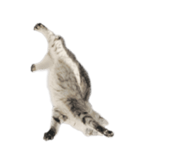 Hyper Cat! sticker #15634751