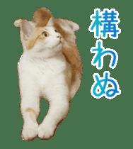 Hyper Cat! sticker #15634752