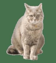 Hyper Cat! sticker #15634753