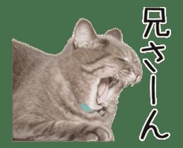 Hyper Cat! sticker #15634755