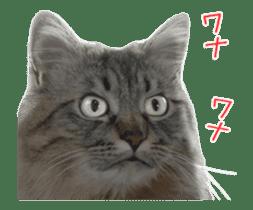 Hyper Cat! sticker #15634756