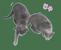 Hyper Cat! sticker #15634761