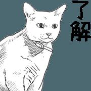 สติ๊กเกอร์ไลน์ Morphing cat2