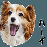 สติ๊กเกอร์ไลน์ active dog papy