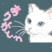 สติ๊กเกอร์ไลน์ Dream cat 6 white