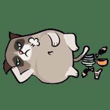 Grumpy Cute Cat sticker #15734557