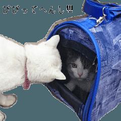 飼い猫J君の写真を使ったスタンプ(関西弁)