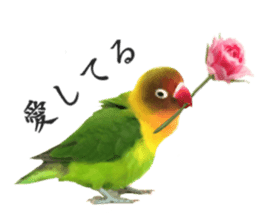 LOVEBIRDS STICKERS sticker #15764594