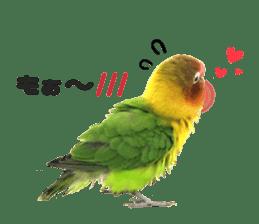 LOVEBIRDS STICKERS sticker #15764595