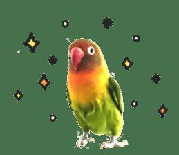 LOVEBIRDS STICKERS sticker #15764596