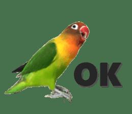 LOVEBIRDS STICKERS sticker #15764597