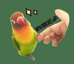 LOVEBIRDS STICKERS sticker #15764598