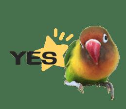 LOVEBIRDS STICKERS sticker #15764599