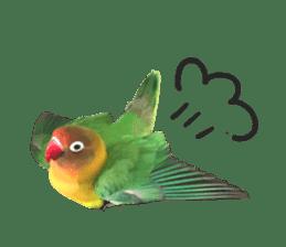 LOVEBIRDS STICKERS sticker #15764600