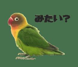 LOVEBIRDS STICKERS sticker #15764601