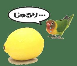 LOVEBIRDS STICKERS sticker #15764603