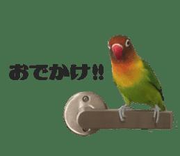 LOVEBIRDS STICKERS sticker #15764605