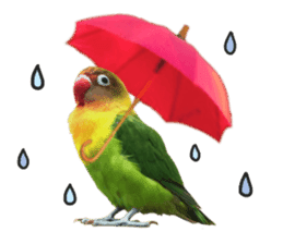 LOVEBIRDS STICKERS sticker #15764607