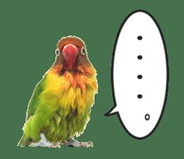 LOVEBIRDS STICKERS sticker #15764609