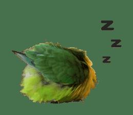LOVEBIRDS STICKERS sticker #15764610
