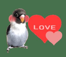 LOVEBIRDS STICKERS sticker #15764611