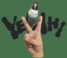 LOVEBIRDS STICKERS sticker #15764613