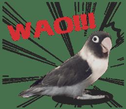 LOVEBIRDS STICKERS sticker #15764614