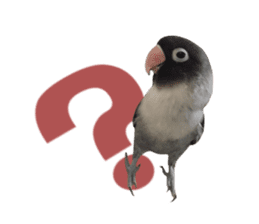 LOVEBIRDS STICKERS sticker #15764615
