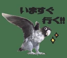 LOVEBIRDS STICKERS sticker #15764618