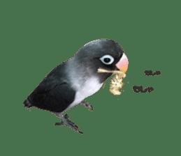 LOVEBIRDS STICKERS sticker #15764620