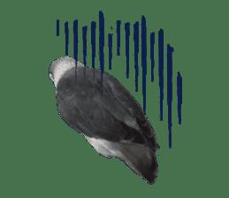 LOVEBIRDS STICKERS sticker #15764624