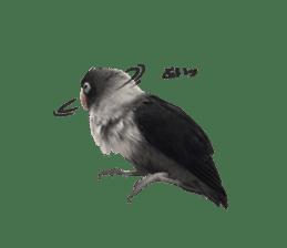 LOVEBIRDS STICKERS sticker #15764625