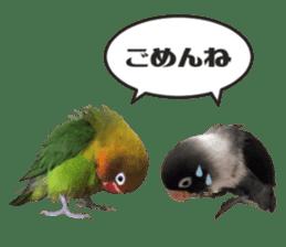 LOVEBIRDS STICKERS sticker #15764632