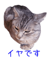Photo stickers of expressive cats sticker #15854682