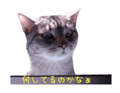 Photo stickers of expressive cats sticker #15854684