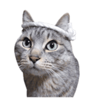 Photo stickers of expressive cats sticker #15854685