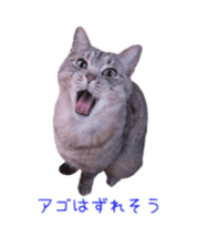 Photo stickers of expressive cats sticker #15854686