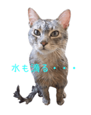 Photo stickers of expressive cats sticker #15854687
