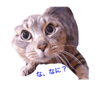 Photo stickers of expressive cats sticker #15854688