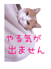 Photo stickers of expressive cats sticker #15854691