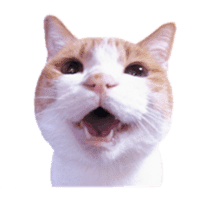 Photo stickers of expressive cats sticker #15854693