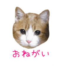 Photo stickers of expressive cats sticker #15854695