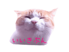 Photo stickers of expressive cats sticker #15854696
