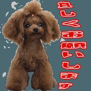 สติ๊กเกอร์ไลน์ mayu's cute Sticker