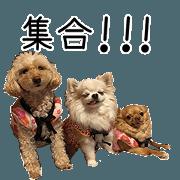 สติ๊กเกอร์ไลน์ AsanymaFamily's dogs Sticker