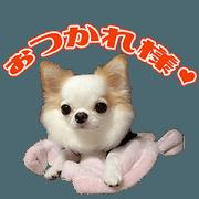 สติ๊กเกอร์ไลน์ MSsama's dog Sticker