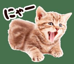 Cat Photo Stickers 07 sticker #15892194