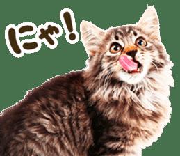 Cat Photo Stickers 07 sticker #15892195