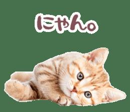 Cat Photo Stickers 07 sticker #15892196