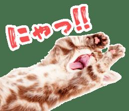 Cat Photo Stickers 07 sticker #15892197